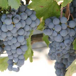 wine-tours2